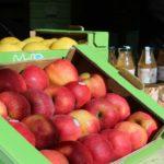 Castel del Giudice festeggia e celebra la mela